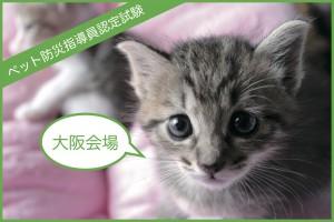 【大阪】11/3 ペット防災指導員認定試験