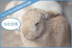 【仙台】1月および2月 ペット防災指導員認定試験