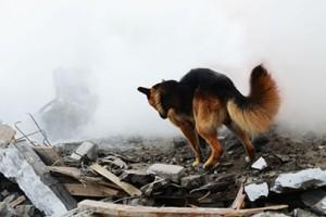 ペットの命を守ろう! 〜迫り来る災害に備えて〜開催決定!!