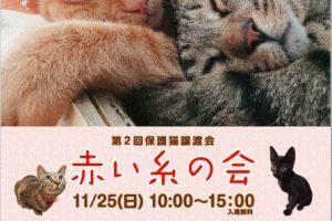 11/25 第2回保護猫譲渡会「赤い糸の会」で講演決定!